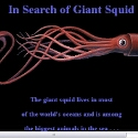In Search of Giant Squid